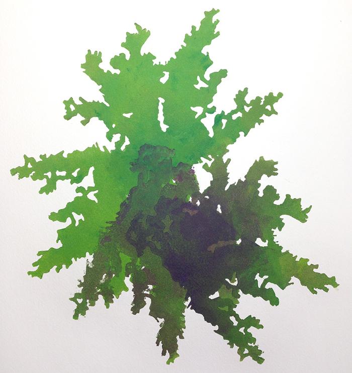 elise-whittemore-algae-4
