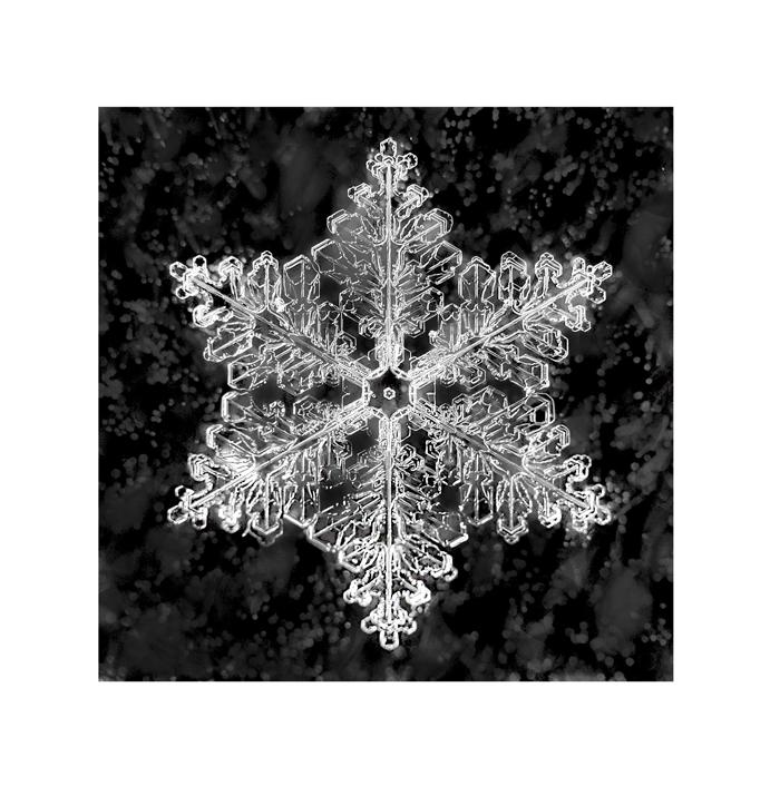 stuart-hall-snowflake-215