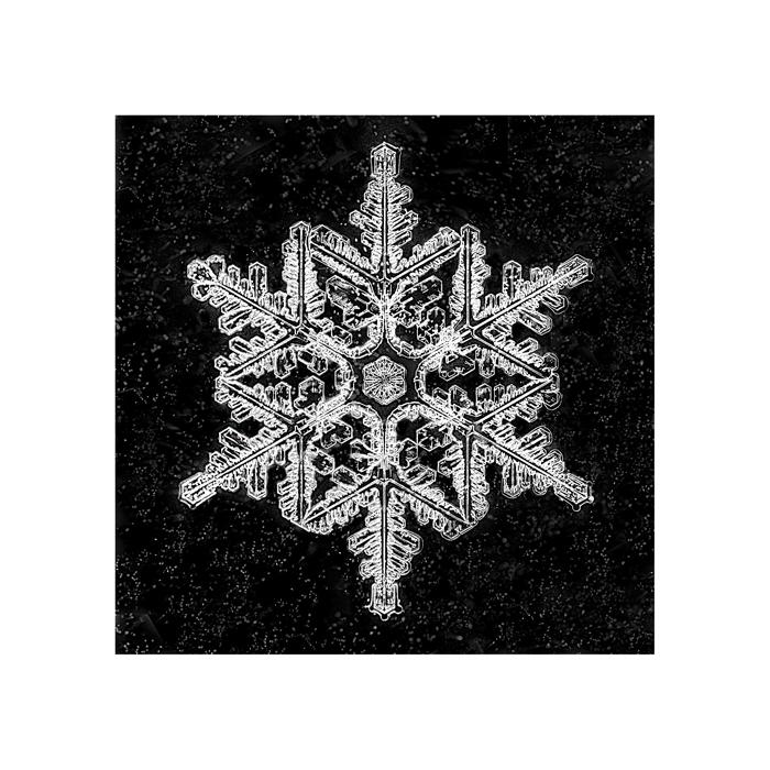stuart-hall-snowflake-3801